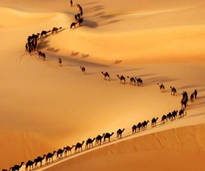 desert, camel, and nature image