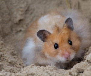 beach, fluffy, and hamster image