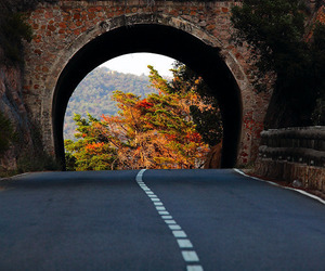 road, autumn, and nature image