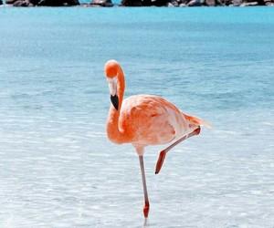 flamingo, ocean, and aruba island image