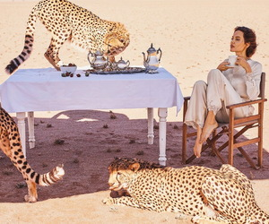 Angelina Jolie and animal image