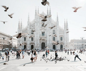 birds, city, and travel image