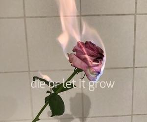fire, Lyrics, and roses image