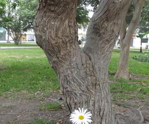 arbol, flor, and margarita image