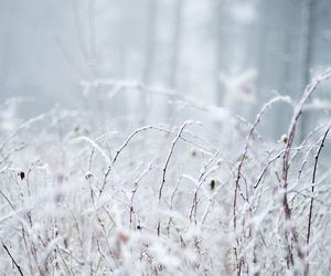 winter, beautiful, and snow image