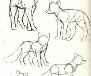 body, draw, and fox image