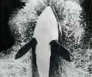 whale, water, and animal image