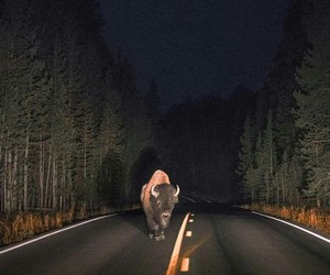 night and road image