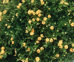 flowers, green, and yellow image