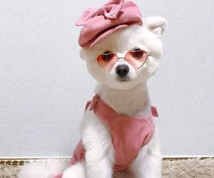 animals, dogs, and fashion image