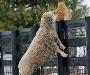 animals, sheep, and animal friends image