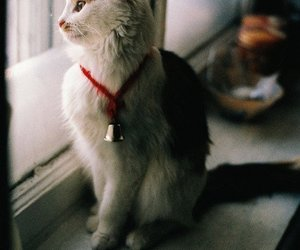 autumn, cat, and cozy image