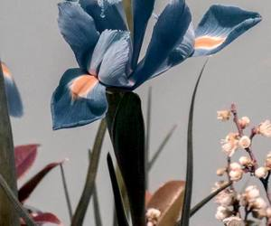 blossom, iris, and floral image