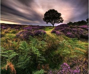 heather, landscape, and nature image