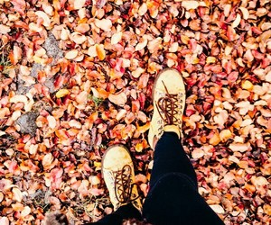 adventure, fall, and leaves image