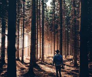 adventure, autumn, and boy image