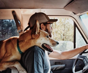 adventure, dog, and car image