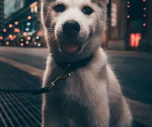 animals, cities, and dog image