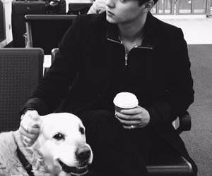 airport, dog, and black and white image