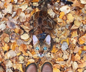 autumn, animal, and cat image