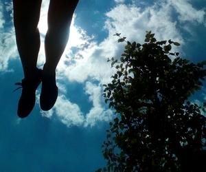 apple tree, blue, and blue sky image