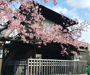 日本 image