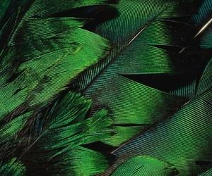 animal, green, and shades image