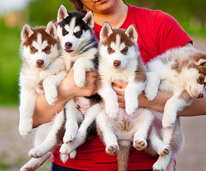 animal and puppies image