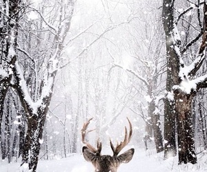 photography, snow, and white image