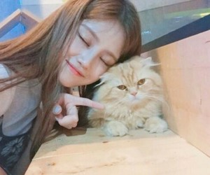 cat, korea, and cute image