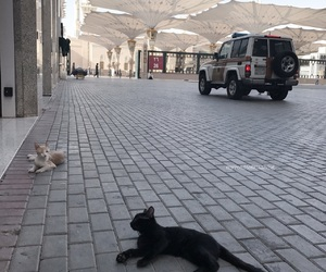 cats, islam, and kitten image
