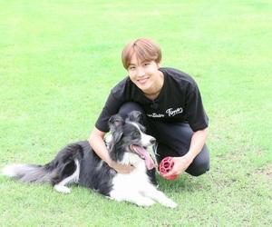 adorable, dog, and hobi image