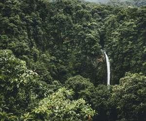jungle, natural, and tropical image