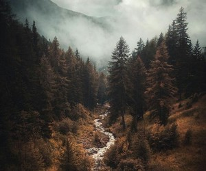 forest, photograph, and photography image