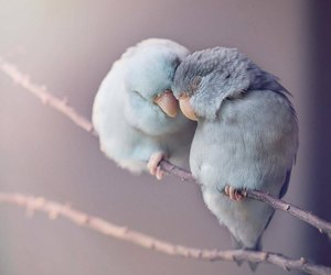 birds, happiness, and tenderness image