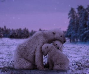 Polar Bear, animal, and winter image