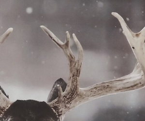 wallpaper, animals, and christmas image