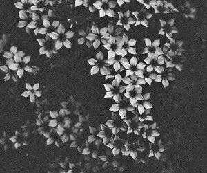 flowers, dark, and aesthetic image