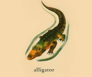 alligator, preschool, and dickybowco image