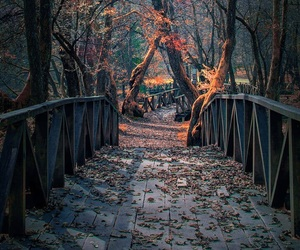 autumn, trees, and bridge image