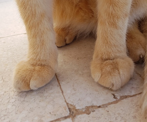 adorable, cat, and paws image