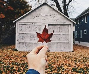autumn, maple leaf, and shed image
