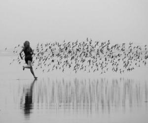 birds, freedom, and noir et blanc image