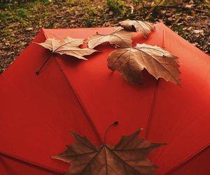 autumn, umbrella, and fall image