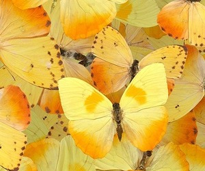 butterfly, wallpaper, and yellow image