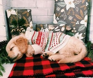 christmas, home, and puppy image