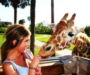 girl, giraffe, and pretty image