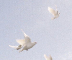 bird, dove, and aesthetic image