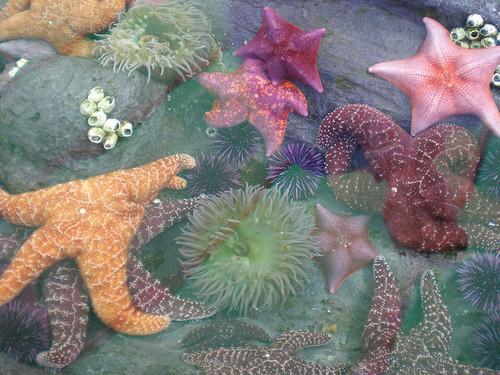 starfish, ocean, and sea image