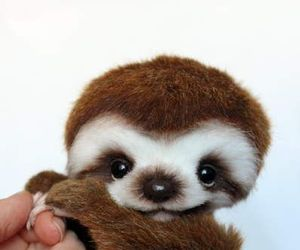 animal, sloth, and cute image